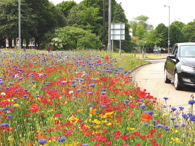 The story behind Rotherham's bloomin' lovely River of Colour cover image